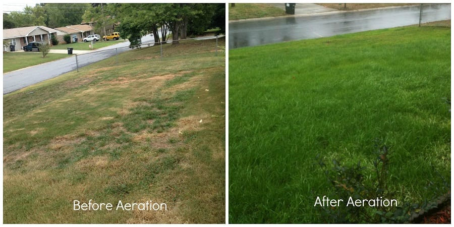 Before and after lawn Aeration