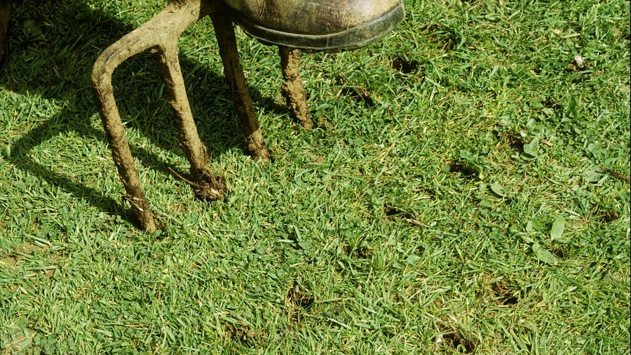Aerate Your Lawn to keep it healthy