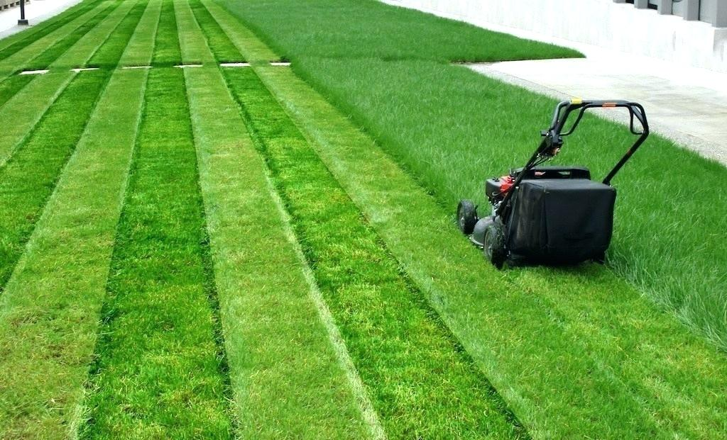 Bermuda grass lawns