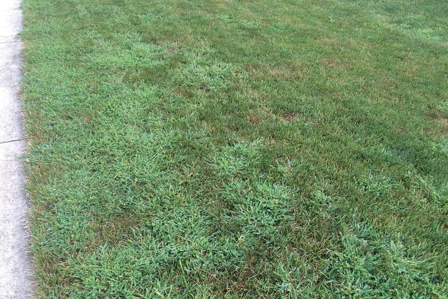 Common Grass Weed And Getting Rid Of Weeds