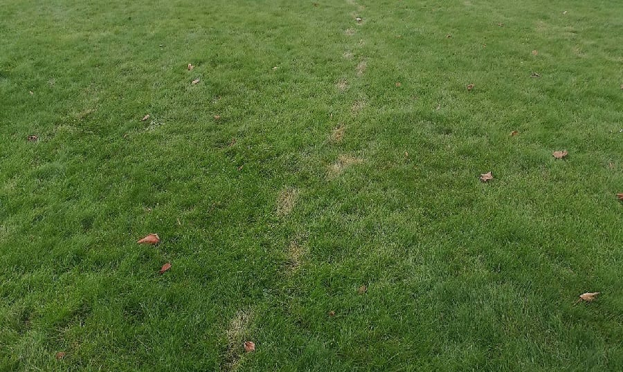 Footprints On A Lawn From Being Dry