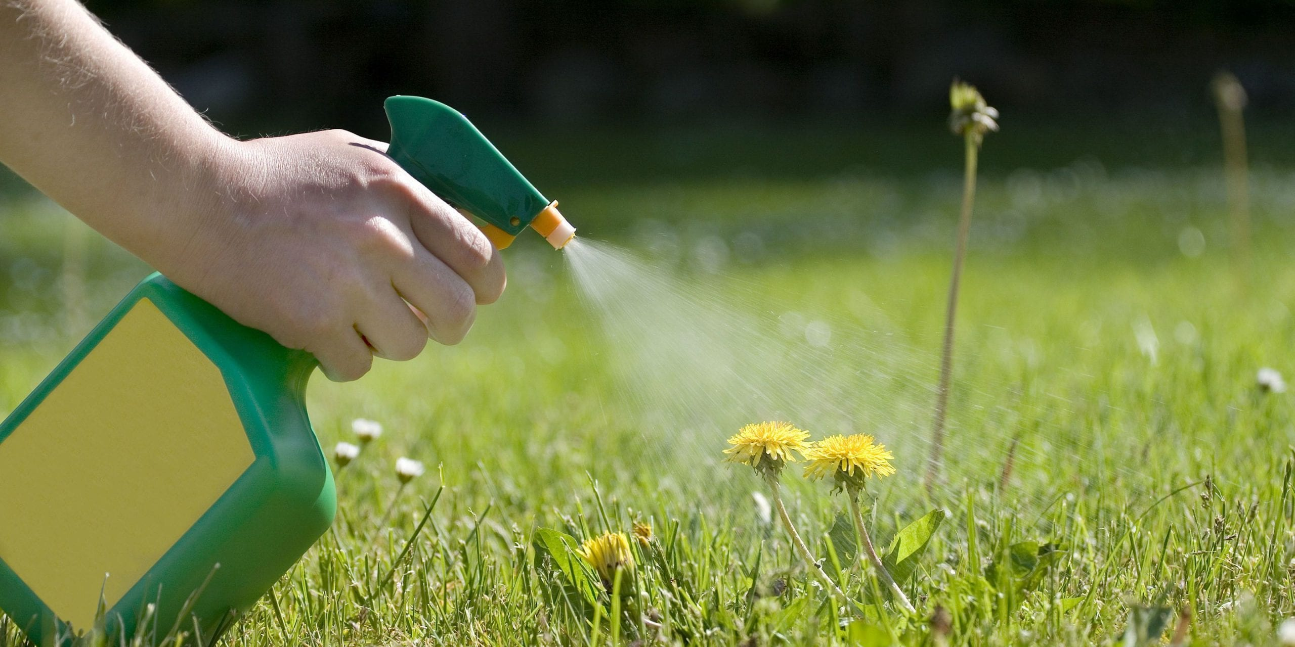 Herbicides to kill weeds