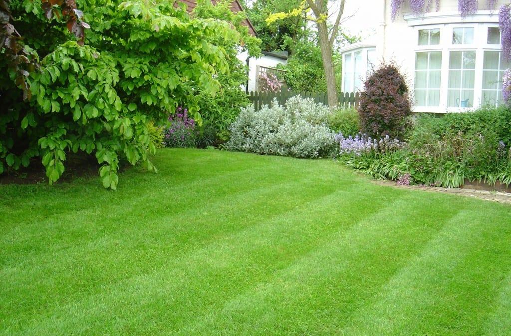 High Quality Grass Seed