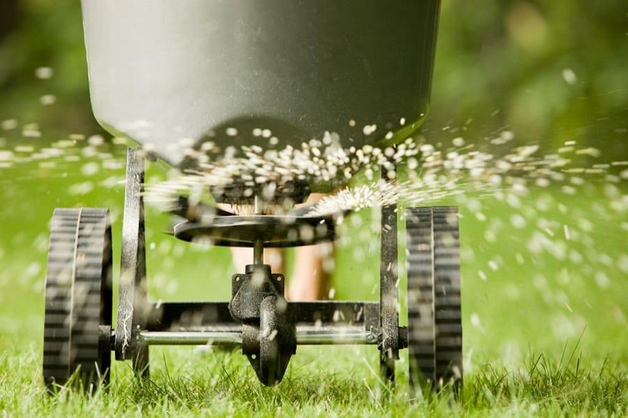 Seeding Lawn Care