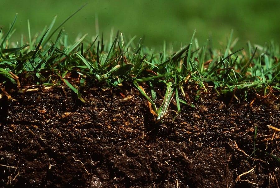 Lawn Soils