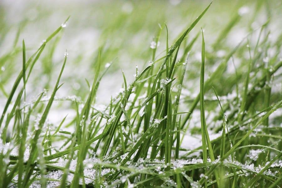Lawn Winters