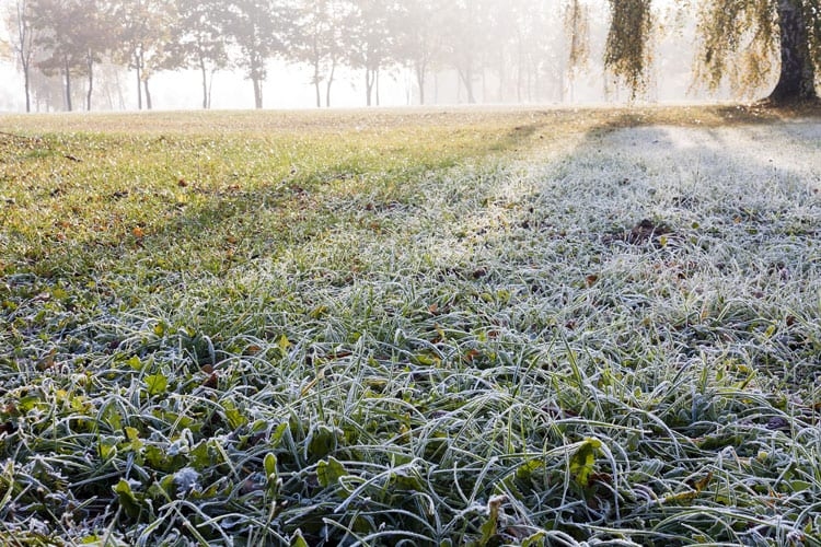 Lawn in Winter With Frost On It