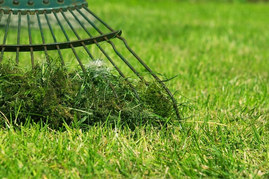 How to Get Rid of Moss in Lawn (3 Easy Ways) 1
