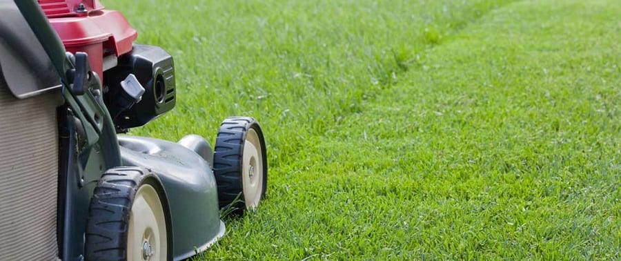 Grass Dry Mowing