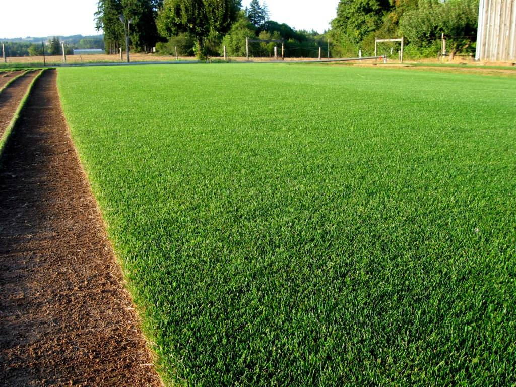 PERENNIAL RYEGRASS Football Fields