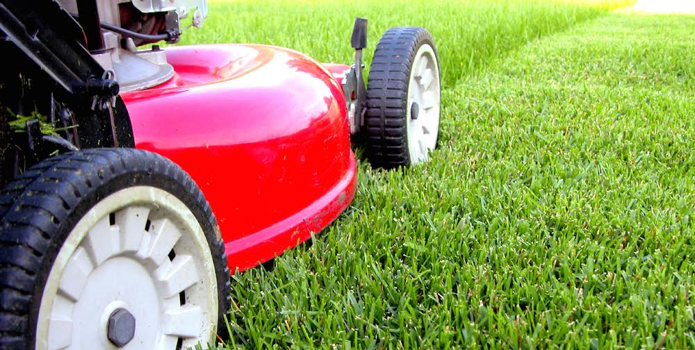 Lawn Care - how often should you mow your lawn