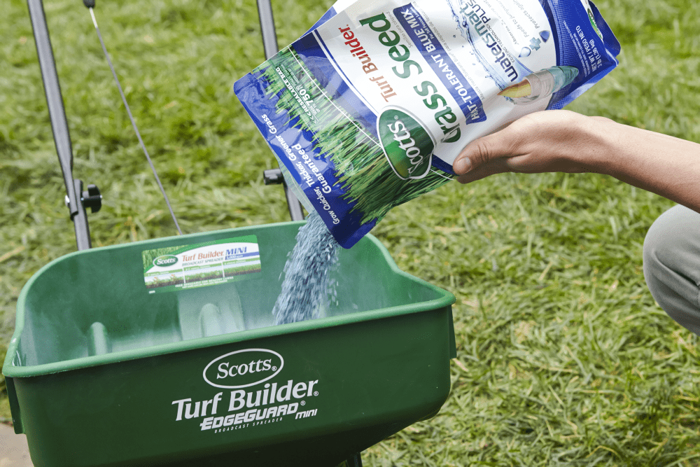 Select Clean grass Seed