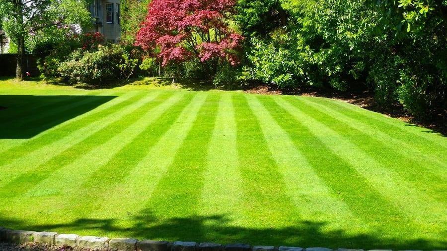 Lawn Treatment Shade