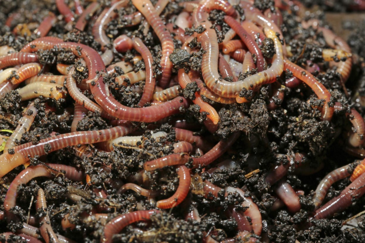 worms in your lawn for a healthy lawn