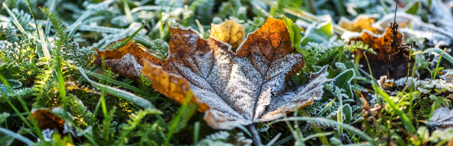 Tips For Lawn Care In Winter