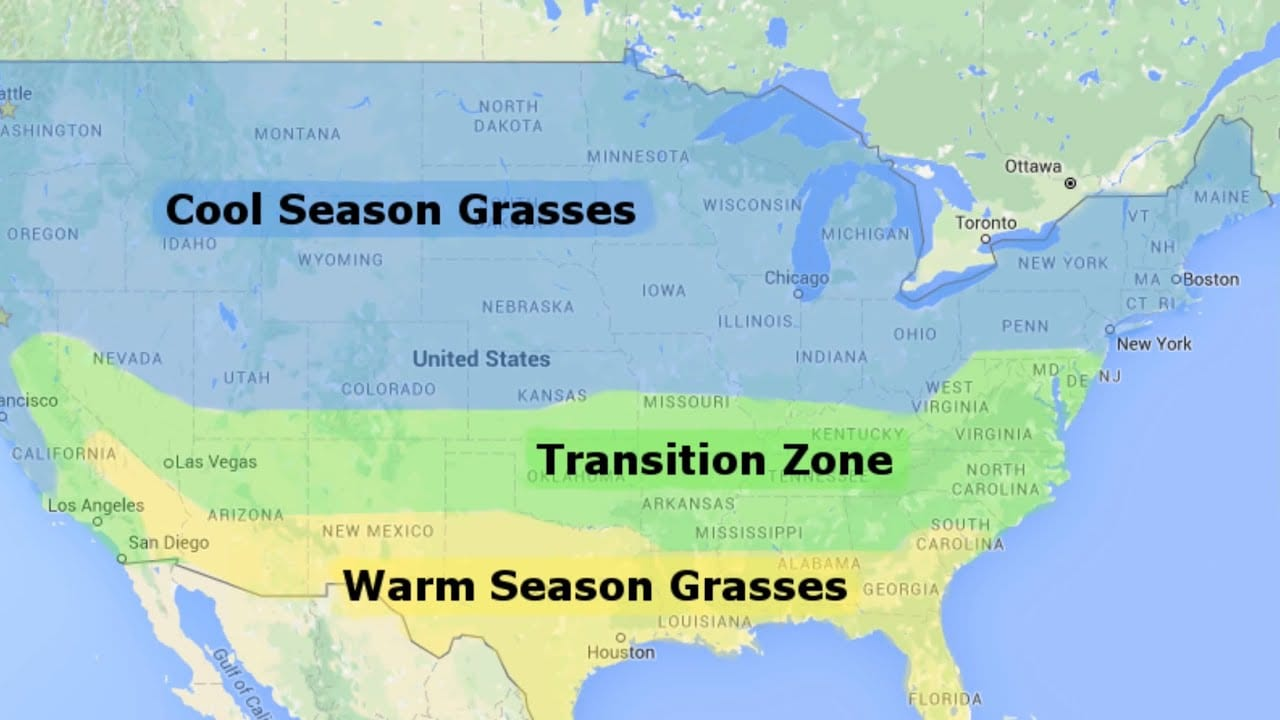 Transition Zone Grass