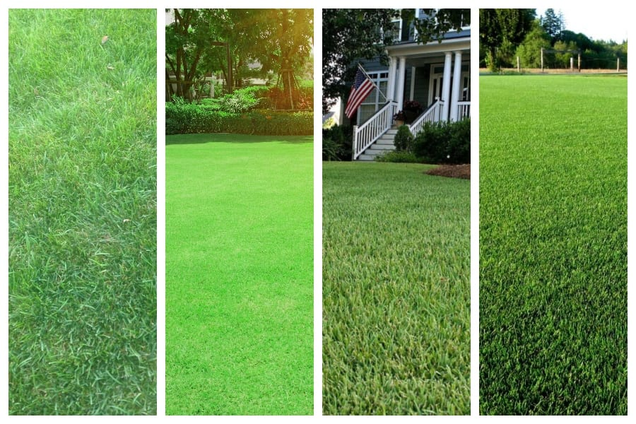 Best Grass for Your Lawn? (Compare 8 Plus Grass Types) 2