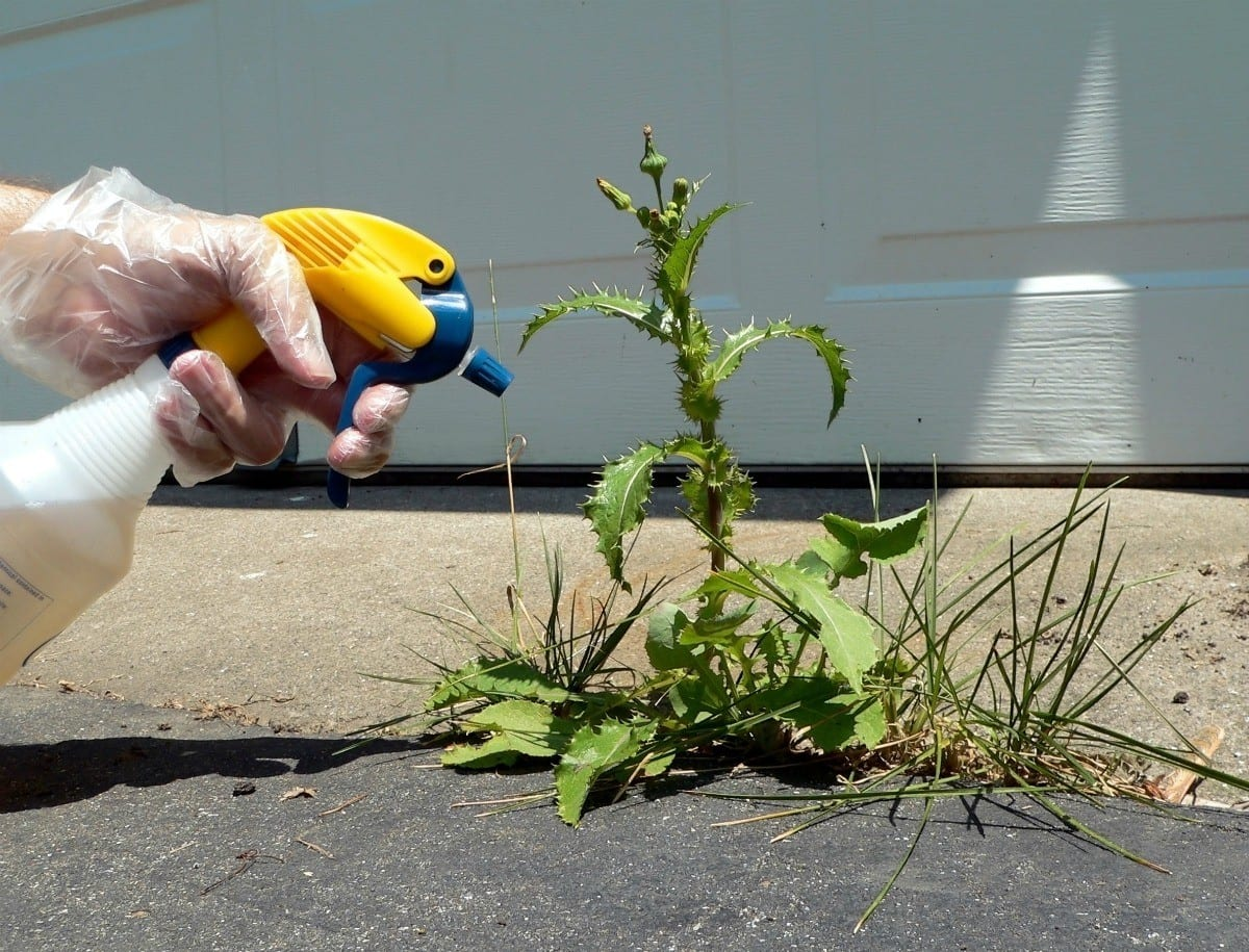 chemicals to get rid of the weeds