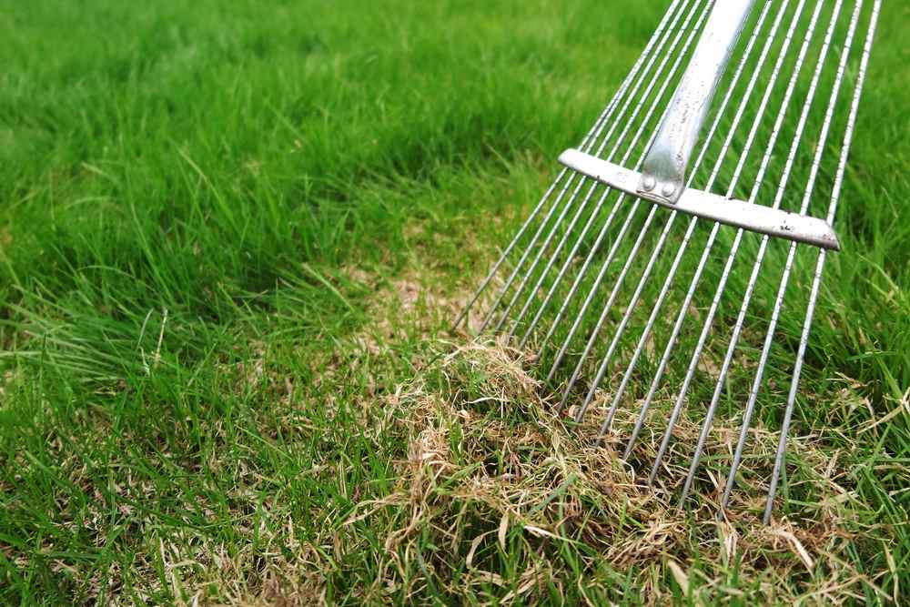 How Often Should You Dethatch Your Lawn?