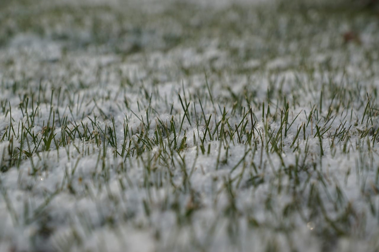 How To Take Care Of Your Lawn During The Winter