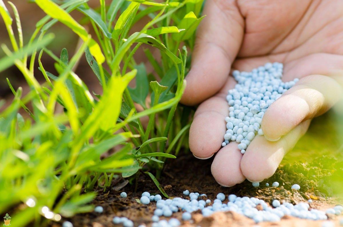 nitrogen-rich fertilizers