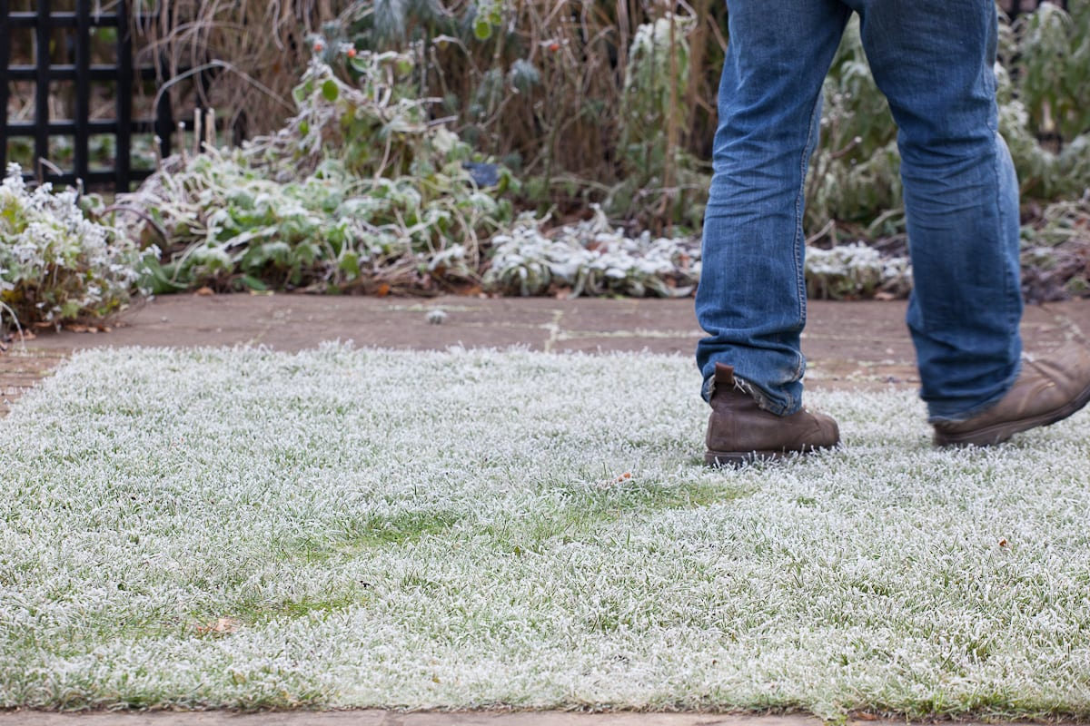 Walking on a frosted lawns